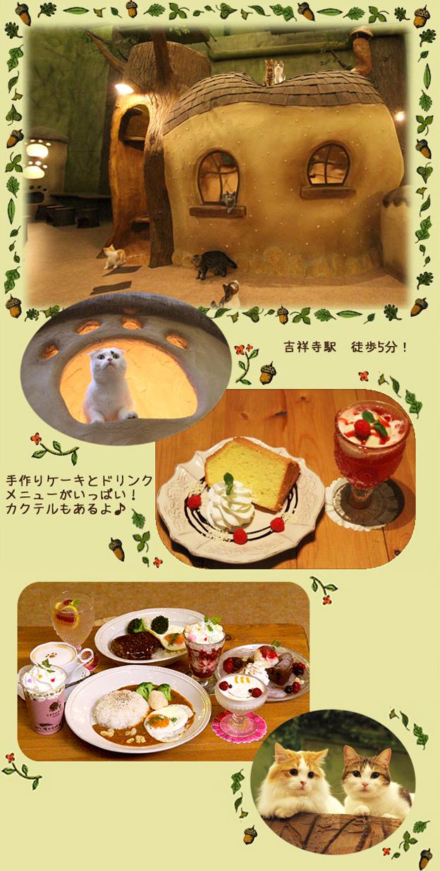 東京 吉祥寺の猫カフェてまりのおうち 吉祥寺駅徒歩5分 手作りケーキとドリンクメニューがいっぱい!カクテルもあるよ