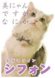 シフォン_A5
