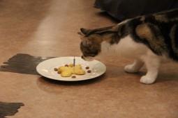 トミーとケーキ