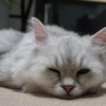 バルーン寝顔