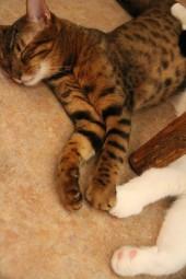 トミドロ寝顔4
