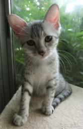cat_img_2_ba4ae