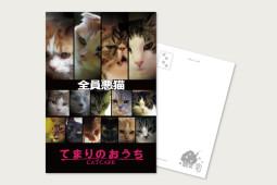 ポストカード 全員悪猫