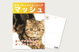 ポストカード-総選挙