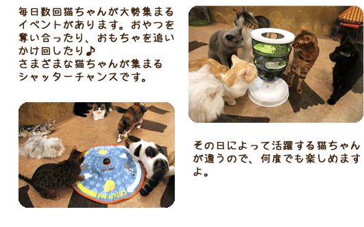 毎日数回猫ちゃんが大勢集まるイベントがあります。おやつを奪い合ったり、おもちゃを追いかけ回したり♪さまざまな猫ちゃんが集まるシャッターチャンスです。 その日によって活躍する猫ちゃんが違うので、何度でも楽しめますよ。